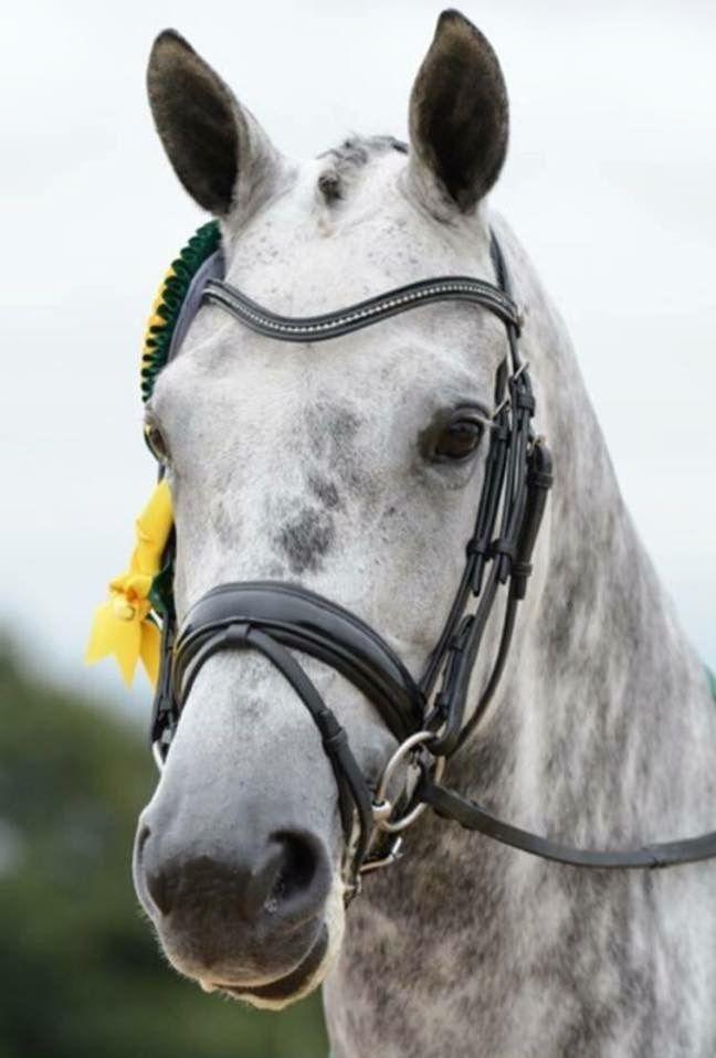 Florentina IV(next top ride of Charlotte Dujardin)