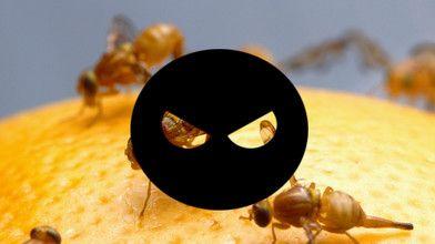 Prosty trik, dzięki któremu ustrzeżesz się przed komarami i muszkami owocówkami