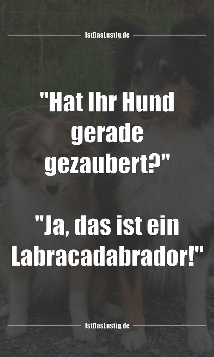 """""""Hat Ihr Hund gerade gezaubert?""""  """"Ja, das ist ein Labracadabrador!"""" … gefunden auf www.istdaslustig…. #lustig #sprüche #fun #spass"""