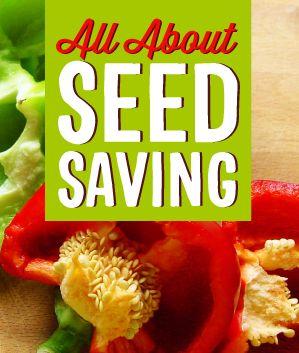 Seed Saving 101 - Infinity Lawn & Garden