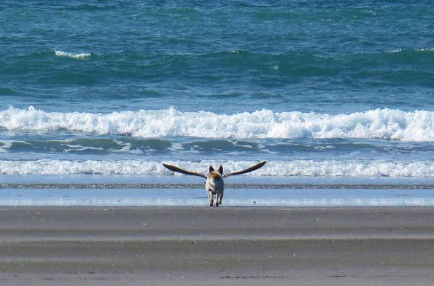 The Magnificent Dog-Bird. | 36 Times The Cosmos Aligned And Gave Us The Perfect Photograph