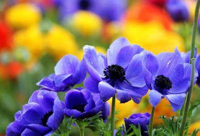 садовые цветы: КОНЕЦ ВЕСНЫ – НАЧАЛО СЧАСТЬЯ!