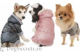 Костюмы для собак сшить своими руками