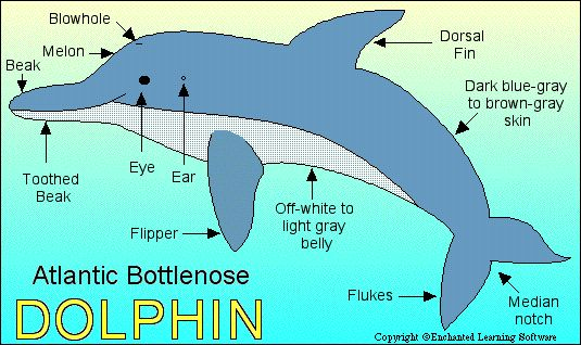 When considering awareness in terms of brain surface, humans are in second place since porpoise and dolphin brains have a larger surface area.- Bruce Lipton  http://raisingconsciousnessnow.com/the-rcn-team/kimberly-burnham/