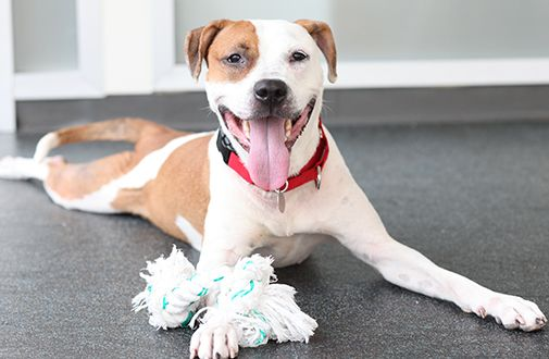 Breed-specific legislation (BSL) is the blanket term for laws that either regulate or ban certain dog breeds in an effort to decrease dog attacks on humans and other animals.