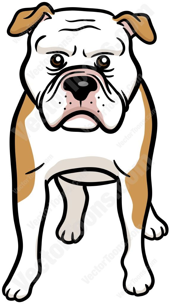 Brown and white American Bulldog #americanbulldog #animal #brownandwhite #canine #dog #facingfront #mediumdog #pet #standing
