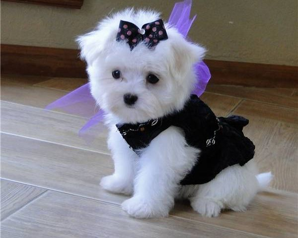 I will have this dog one day! Even with a bow in her hair!