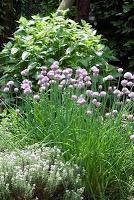 10 Herbs for Your Spring Garden