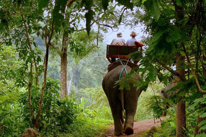 Elephant safari, Periyar National Park, Kerala, India