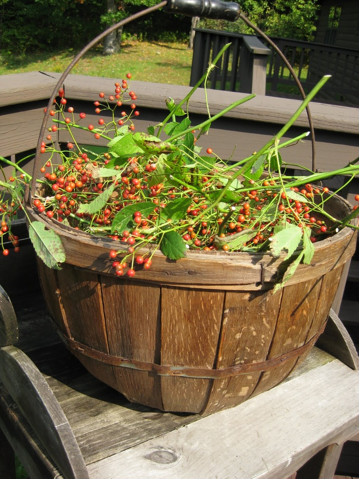 =)  a basket full of freshly picked berry sprigs.....