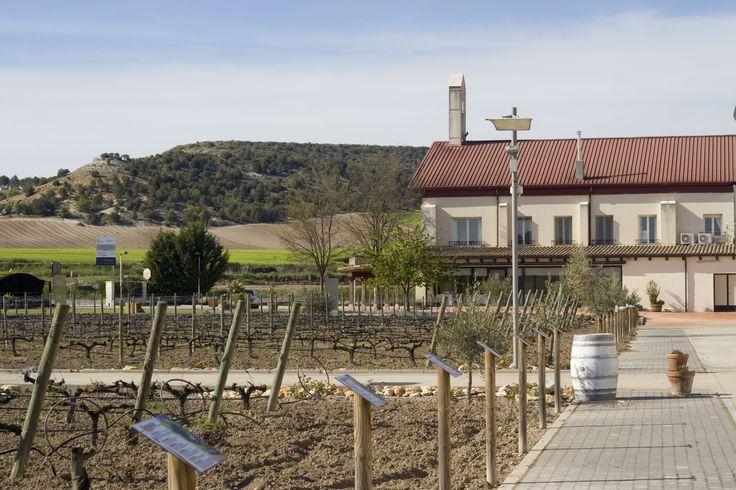 Jardín de Variedades. Disfruta del entorno del Restaurante La Espadaña y Bodega Emina en la Ribera del Duero. www.restauranteespadana.es