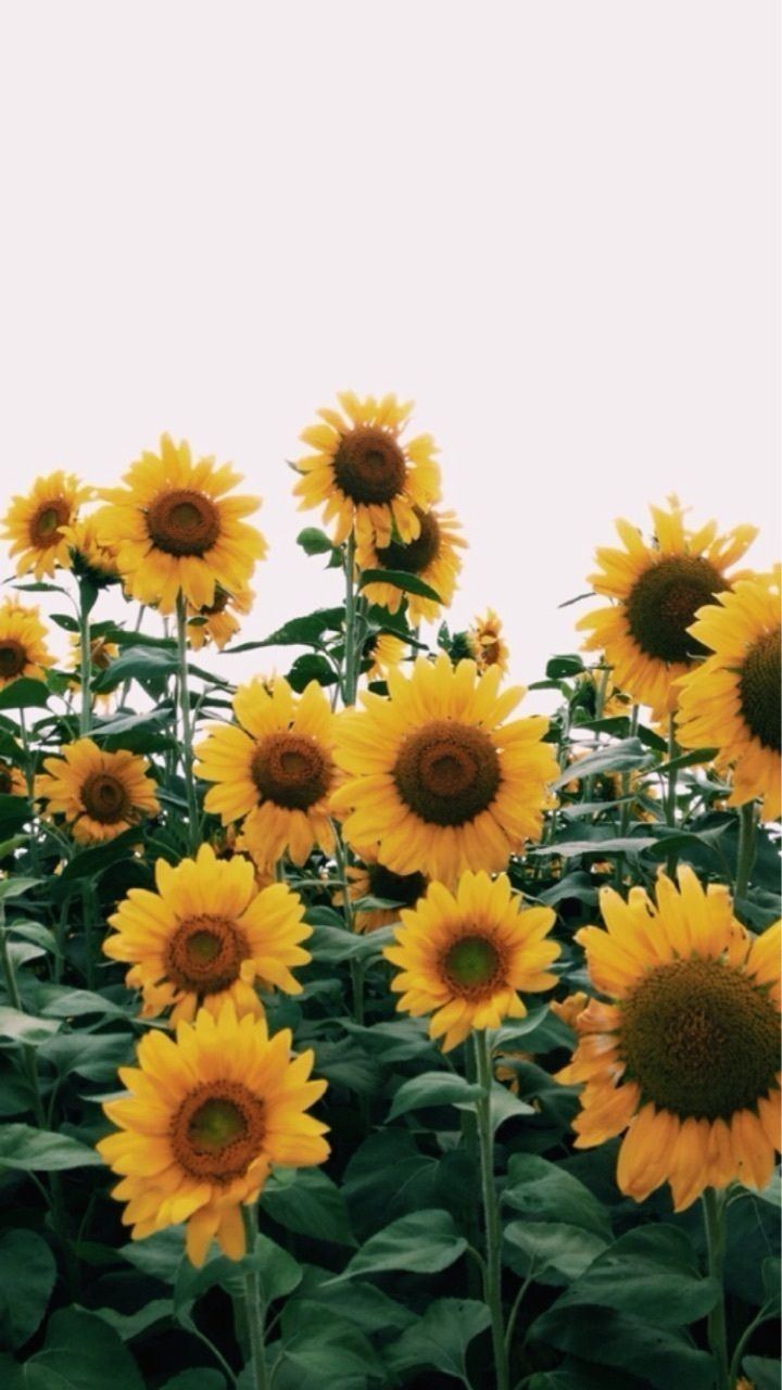 Cute Floral Wallpaper For Iphone Moon Child Garden In 2019 Sunflower Wallpaper