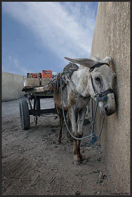 Sie werden frei geboren und zu Sklaven gemacht.    Millionen Tiere leiden tagtäglich im Dienst für die Menschen. Sie werden ihren Familien entrissen, erleiden schrecklichste Qualen und werden nach einem Leben voller physischer und psychischer Schmerzen umgebracht oder sich selbst überlassen.