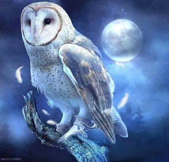Owl standing on a branch & moon art | Owls | Pinterest | Moon art ...