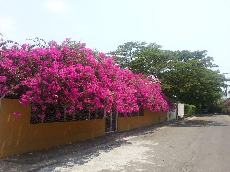 Veraneras en Santa Marta COLOMBIA