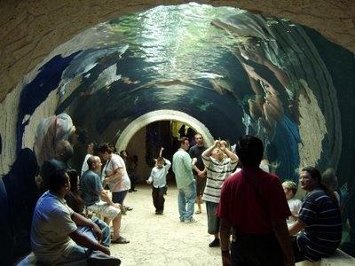 1000 Ideas About Dallas World Aquarium On Pinterest