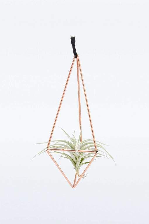 luchtplantjes terrarium