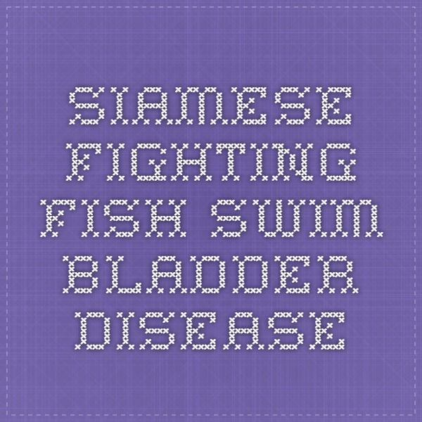 Siamese fighting fish-swim bladder disease