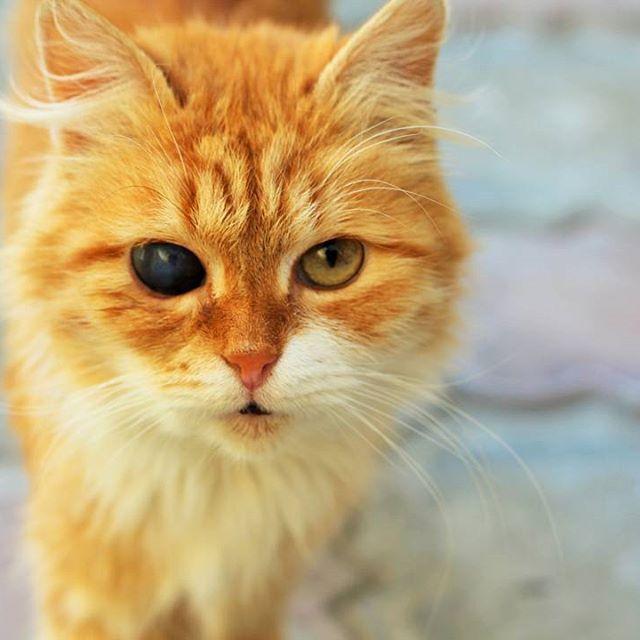 """Вот такого удивительного, прекрасного  котика мы встретили на улице💙  Берегите наших братьев меньших, всё таки это наш долг, если мы действительно """"человек разумный"""", то должны помнить об этом)) #кот #рыжий #улица #природа #красота #♥ #инстаграмнедели #животные #котик #cat #streetcat #street #animals #глаза #eyes"""