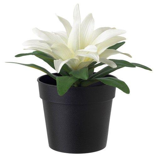 FEJKA yapay saksı bitkisi, bromeliad-beyaz - Google'da Ara