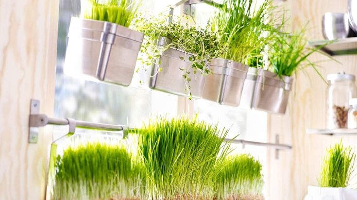 rangement mural plantes aromatiques ikea