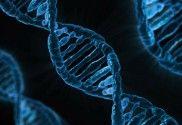 Memoriile traumatice ale strămoșilor se transmit genetic - Theta Healing