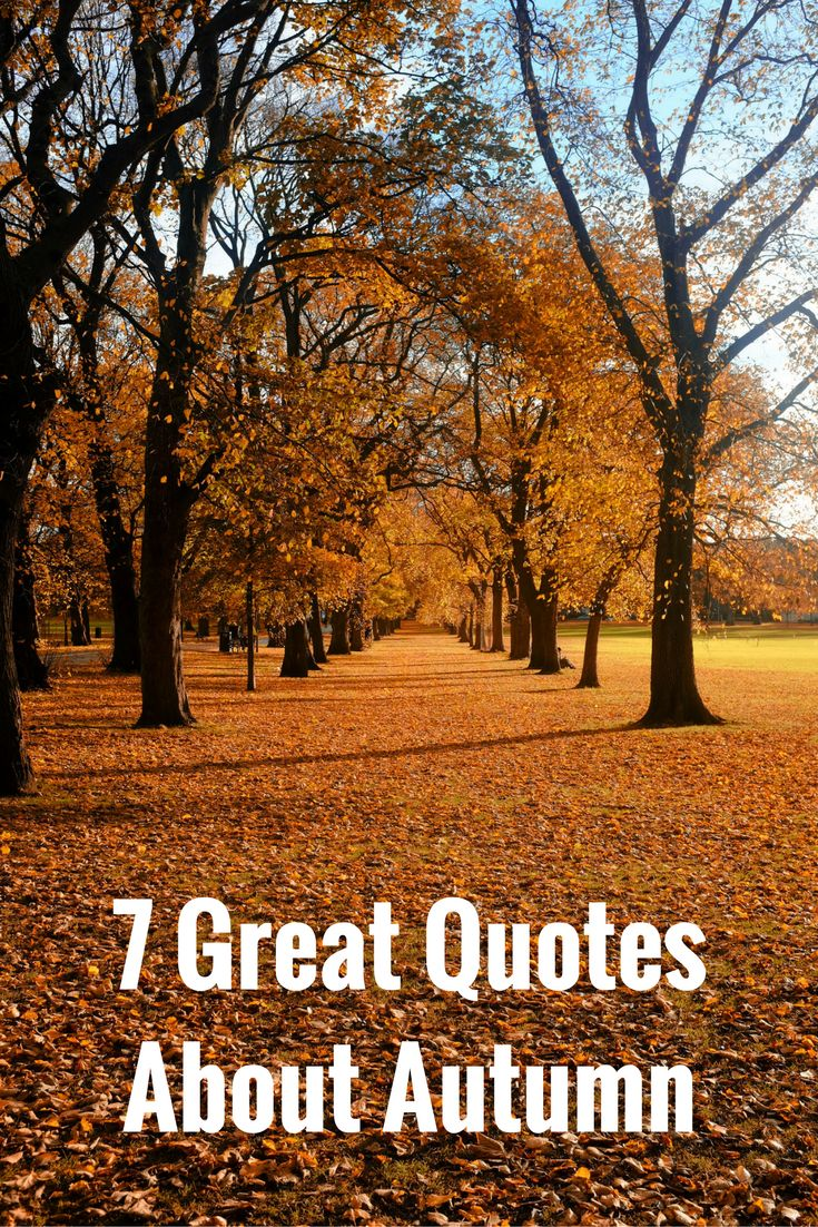 Enjoy this collection of picture quotes about autumn that are as invigorating as the season itself. via @dianenassy