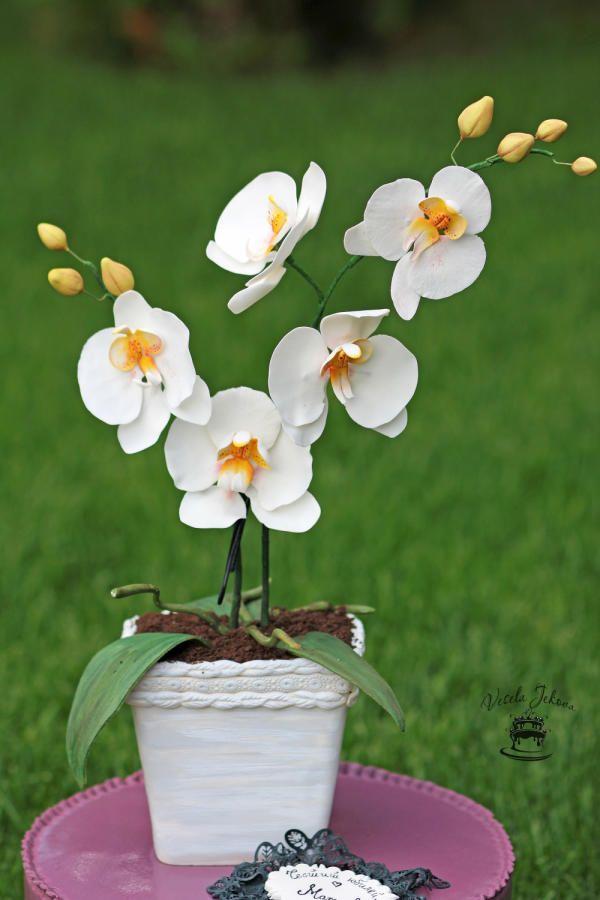 My orchid... by Vesela Jekova