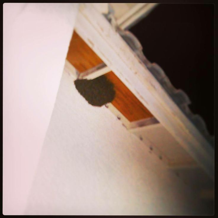 #Bees in #Tucson 886-PEST