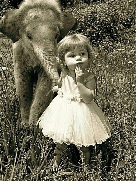 A little girl and a baby elephant:):