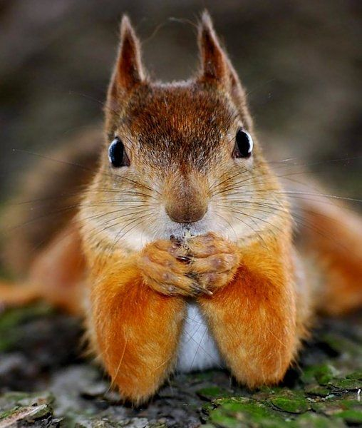 Today is January 21st, which means it's Squirrel Appreciation Day!