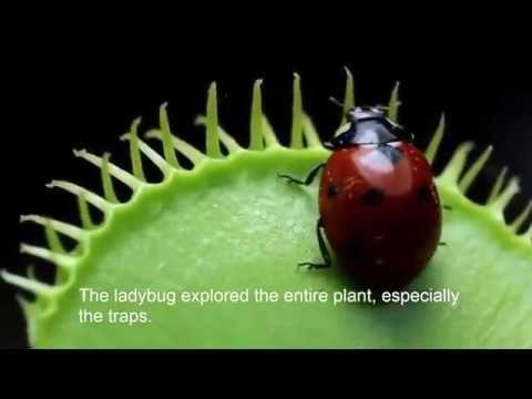 AMAZING    CARNIVOURS    PLANTS
