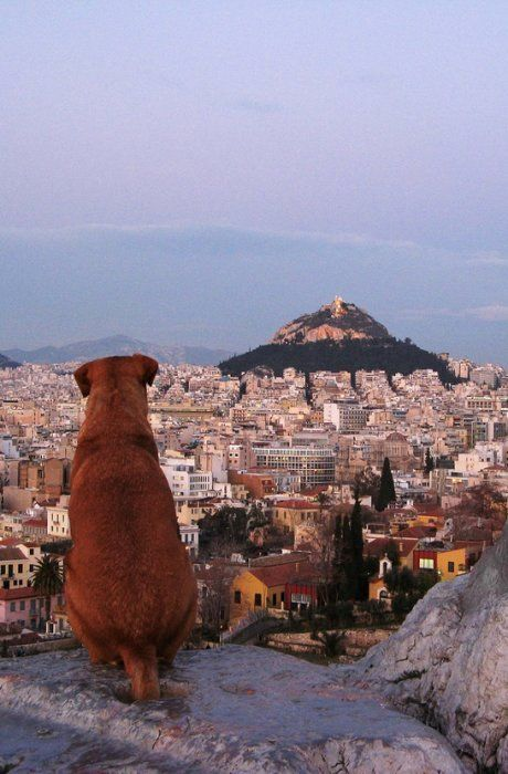 A dog looks out over Athens, Greece..There were so many dogs on the streets in Athens.