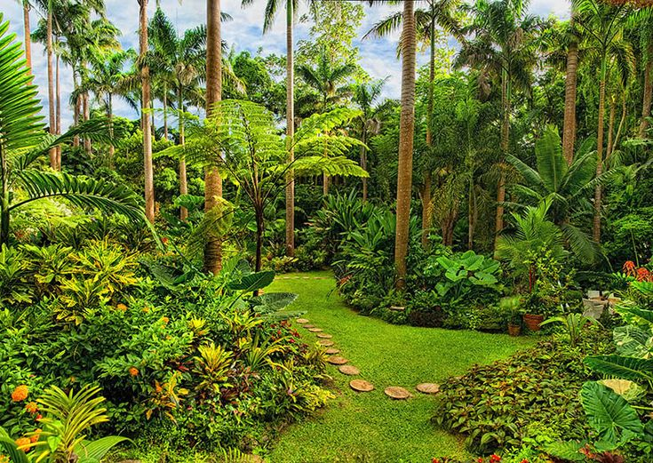 Explore The Beauty Of Caribbean: 56 Best Explore Barbados: Landscapes & Forests Images On