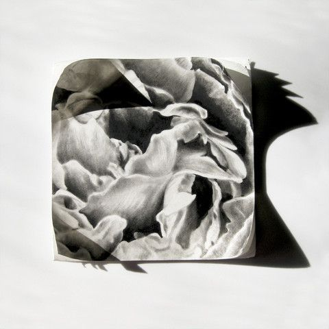 Six Stages II by Haywood | PLATFORMstore. Charcoal drawing on mat board