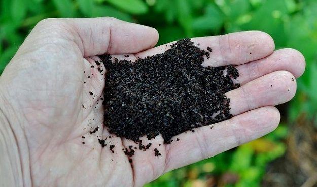 Используйте молотый кофе в вашем саду   10 Садоводство Советы и хитрости, которые должен знать каждый