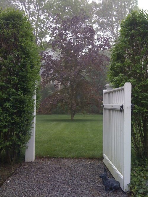 www.thegoodgarden.com - A white picket gate frames a copper beech tree in East Hampton, NY.