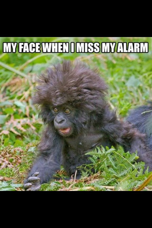 Laughed so hard not gonna lie! This is what I look like when I wake up!