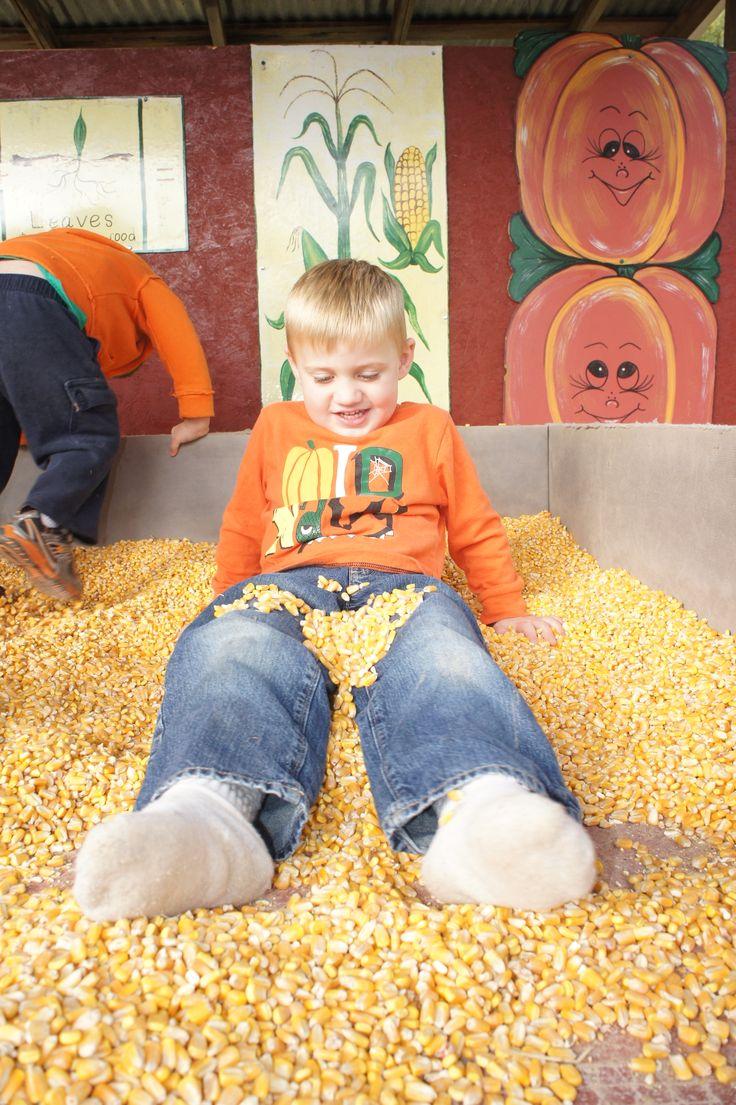 Fun in the corn.