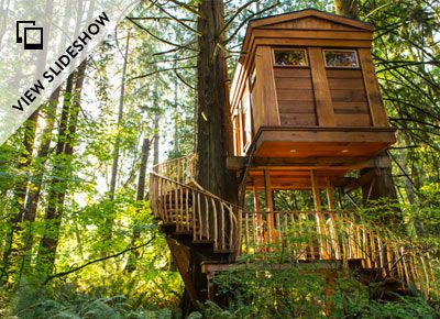 Crazy-cool treehouses you can actually stay in, from luxury tree hotels to exotic rustic bungalows.  Read more: http://www.purewow.com/entry_detail/national/6628/The-treehouse-is-the-new-hotel.htm#ixzz2ZQ0VXpJL