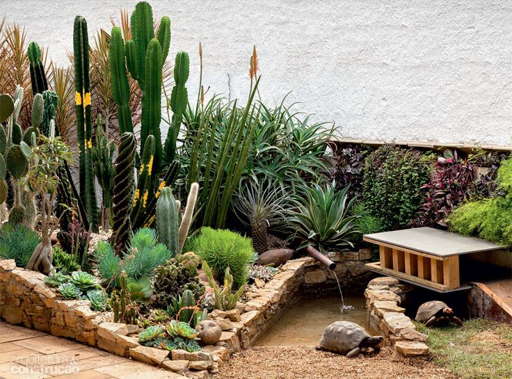mini jardim de cactus:Jardim Com Pedras E Cactos