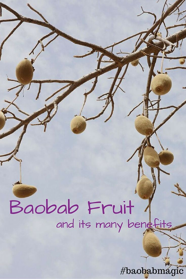 Known as the African Tree of Life, Baobab has many benefits. All parts of the tree are used and is sacred amongst the communities where it grows!