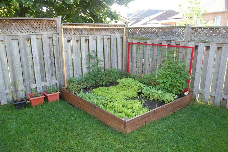 Why not trellis your tomato plants this year backyard for Vegetable garden pergola