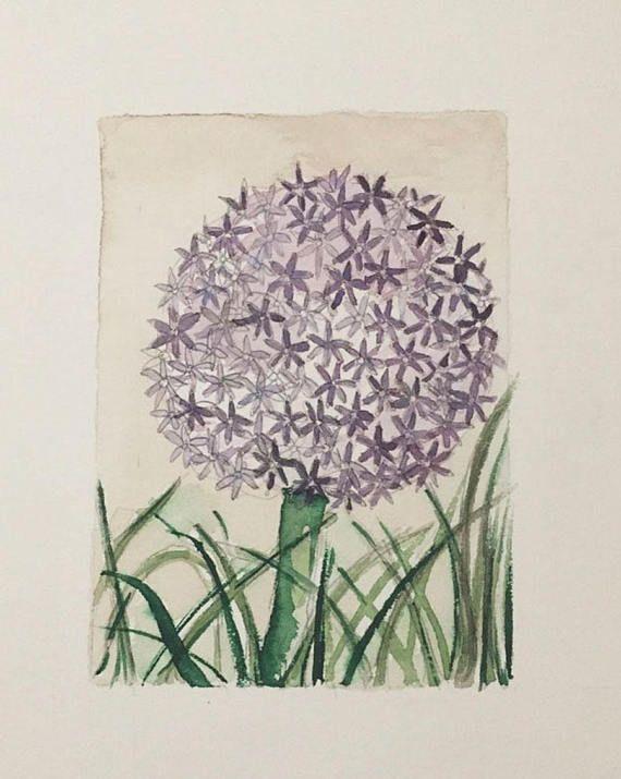 Allium giganteum Watercolor lámina de la colección BOTANICAS