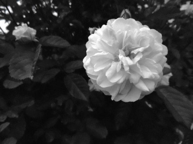 Bloom | Flickr - Photo Sharing!