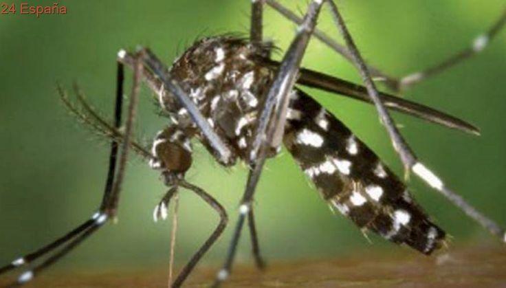 El mosquito tigre ya es el insecto picador que más quejas genera en el Mediterráneo español