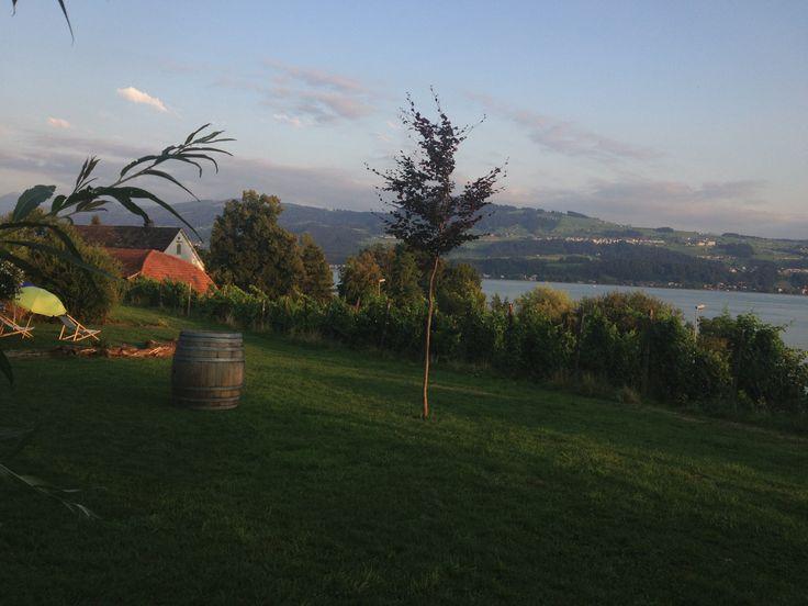 View, Vineyard, Lake, moschti
