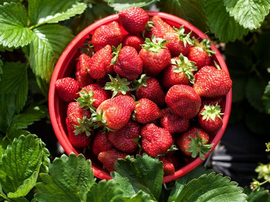 Fruit plukken juli | Soluvert.nl