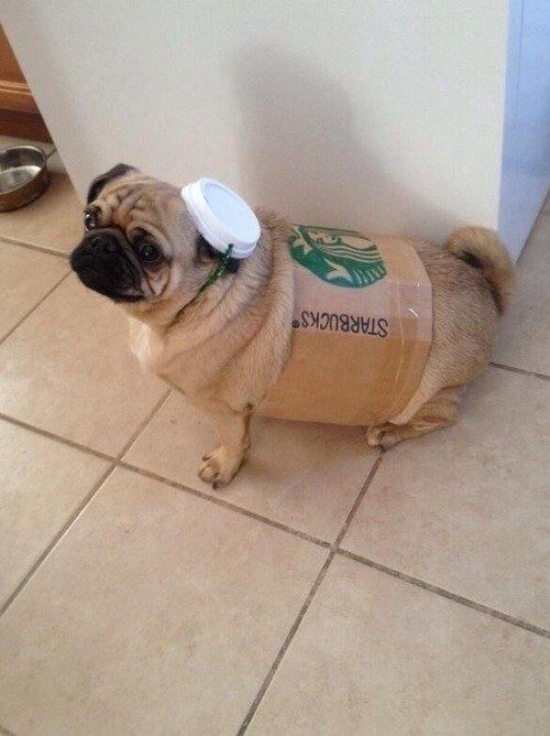 A pug dressed as Starbucks. | 41 Pictures You Need To See Before The Universe Ends (ONE OF MY FAVORITE POSTS EVER)