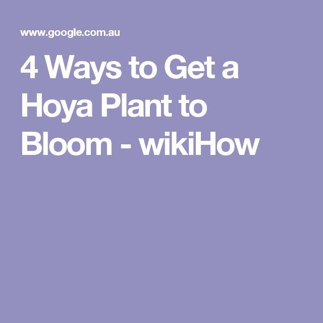 hoya plant care instructions